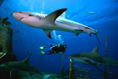scuba diving advanced course padi