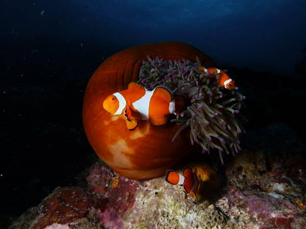 ishigaki kabira scuba diving japan euro divers